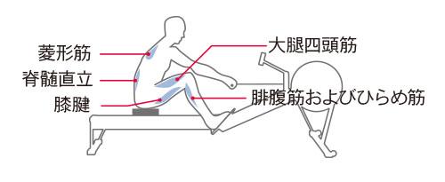 コンセプト2ローイングエルゴメーター筋肉使用図